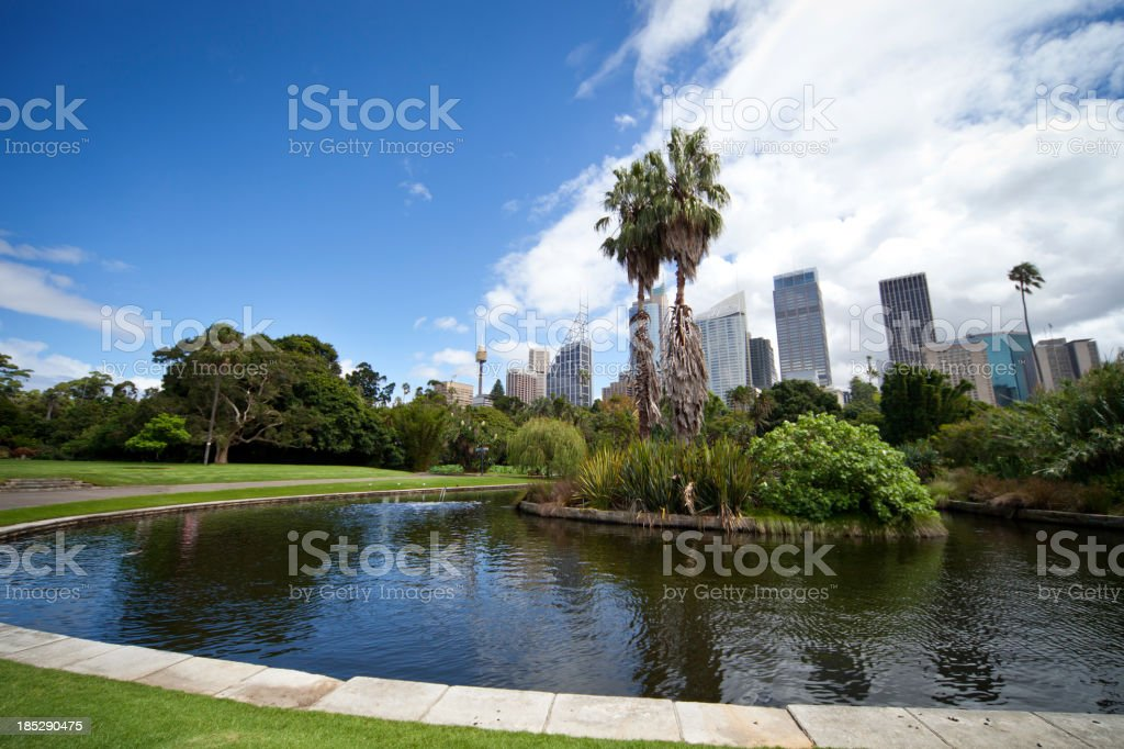 Sydney CBD seen from park stock photo