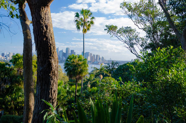 sydney - wasser stock pictures, royalty-free photos & images
