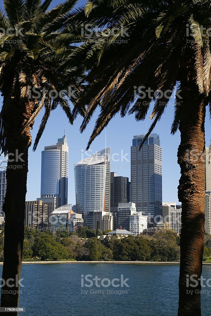 Sydney towers framed by palms royalty-free stock photo
