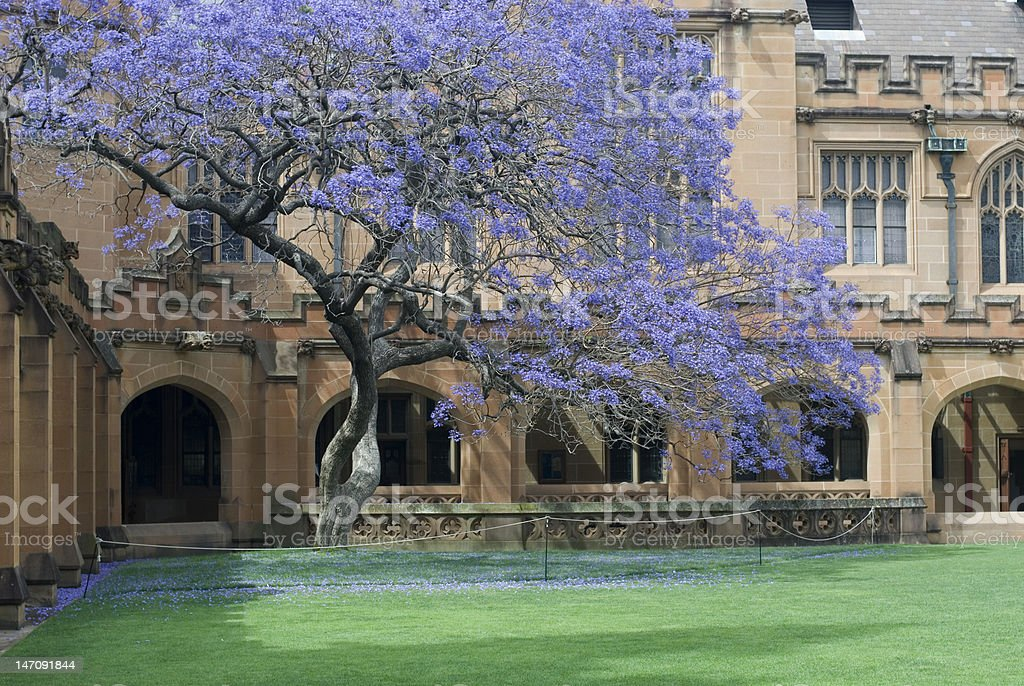 Sydney University Quadrangle stock photo