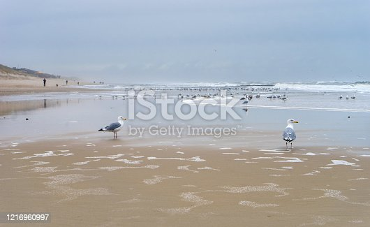 Lonely coastal landscape of the island of Sylt in winter with seagulls
