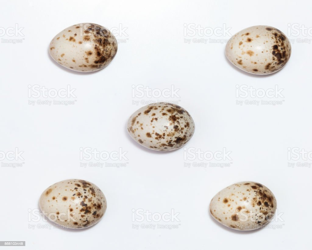 Sylvia curruca. The eggs of the Lesser Whitethroat in front of white background, isolated. stock photo