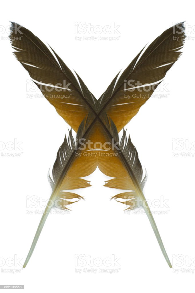 symbol feather on white background stock photo