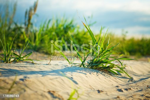 Background Of Freshly Grown Sprouts Of Grass