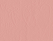 Symbol of heart and flower scribbled on pink plastered wall.