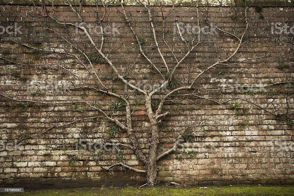 Symbolic Tree stock photo