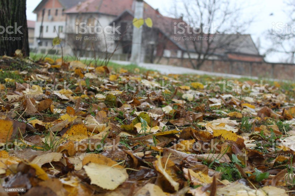 symbols of autumn stock photo