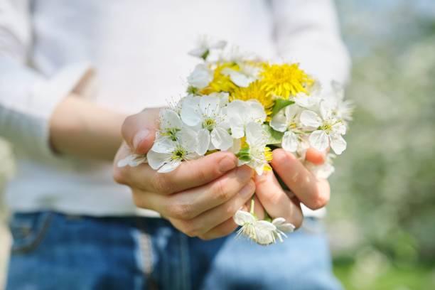 Símbolos de flores blancas primaverales de cereza y diente de León amarillo en manos de niña, vista superior de cerca - foto de stock