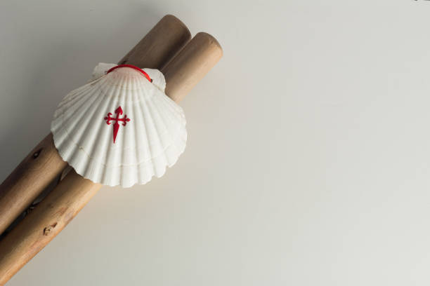 Symbols of the Way of Saint James (Camino de Santiago de Compostela) Symbols of the Way of Saint James. Wooden staff and Scallop shell with a printed cross of St James. White background with copy space pilgrim stock pictures, royalty-free photos & images