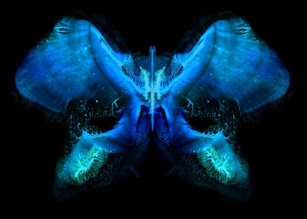 Symmetrical painted butterfly pattern picture id1010463966?b=1&k=6&m=1010463966&s=612x612&w=0&h=qnbfdjim6pybox5q en9ipmydlwkjs oaotxsinetsu=