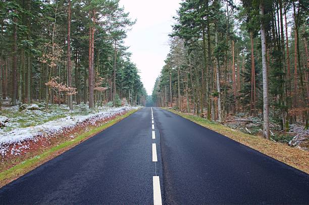 symmetry and convergence in the black forest - dotted line stock photos and pictures