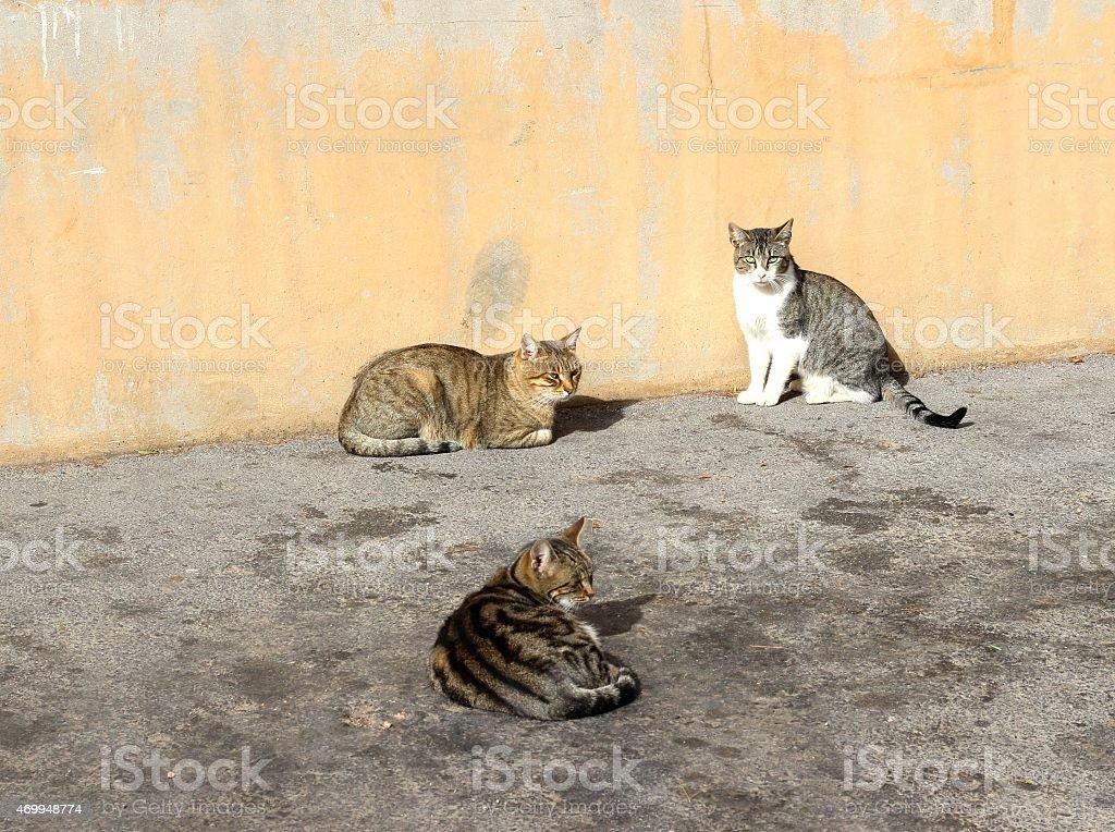 Sympathetics cats in the street stock photo