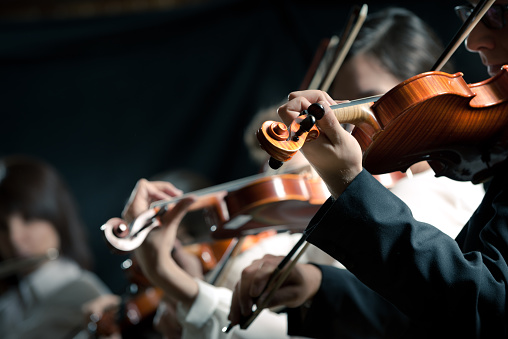 Symphony orchestra violinists performing
