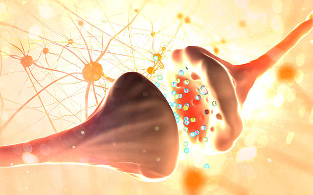 Synapse and Neuron cells sending electrical chemical signals Synapse and Neuron cells sending electrical chemical signals neurotransmitter stock pictures, royalty-free photos & images