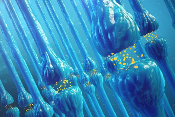 synaptische übertragung, menschlichen nervensystem. gehirn synapsen. übertragung synapse, signale, impulse in das gehirn, informationstransfer auf zelluläre oder atomaren ebene. 3d-rendering - axon stock-fotos und bilder