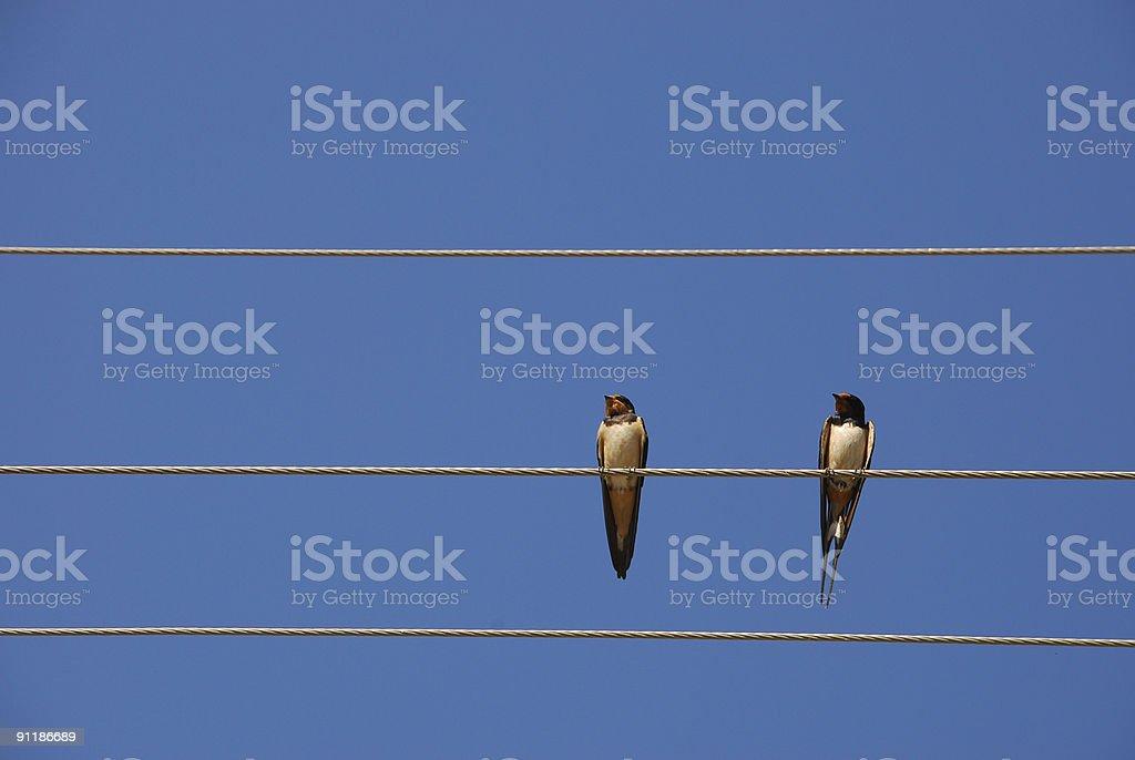 synchronism royalty-free stock photo