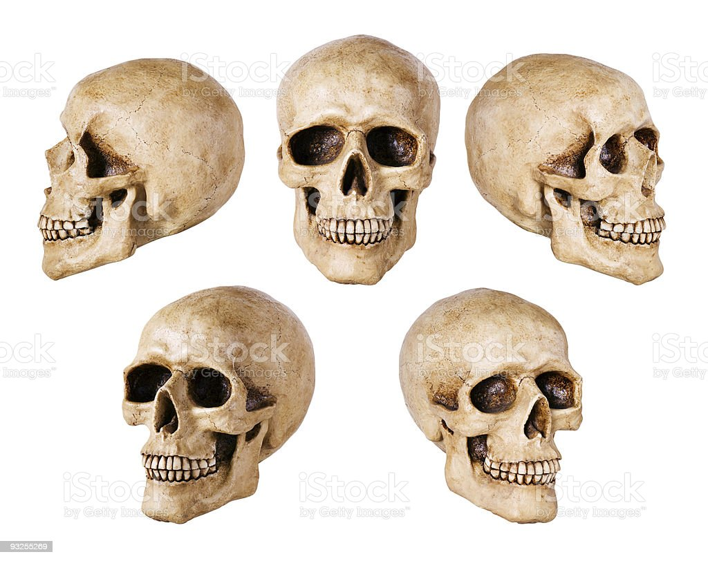 synthetical skull royalty-free stock photo