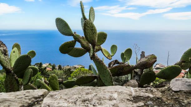錫拉庫紮,西西里島,義大利 - cassata 個照片及圖片檔