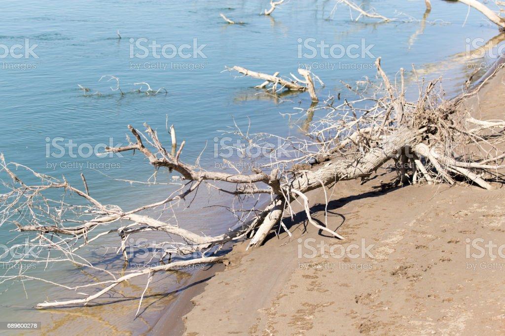 Syrdarya river .Kazahstan stock photo