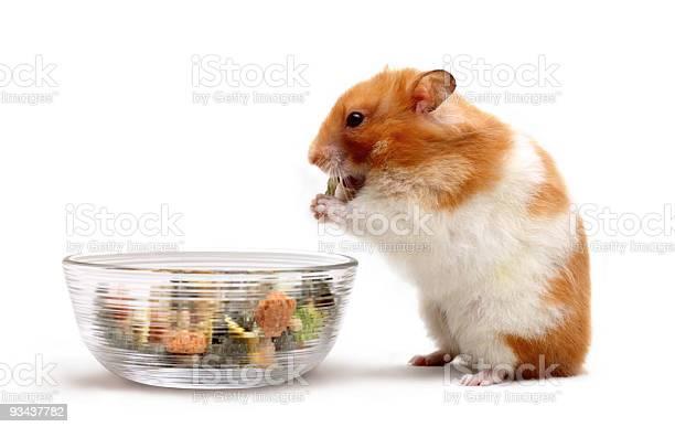 Syrian hamster picking snacks from a glass bowl picture id93437782?b=1&k=6&m=93437782&s=612x612&h=tufyyz6 f8kfejifzikk j6sg4qoyxojbxzj5vspack=