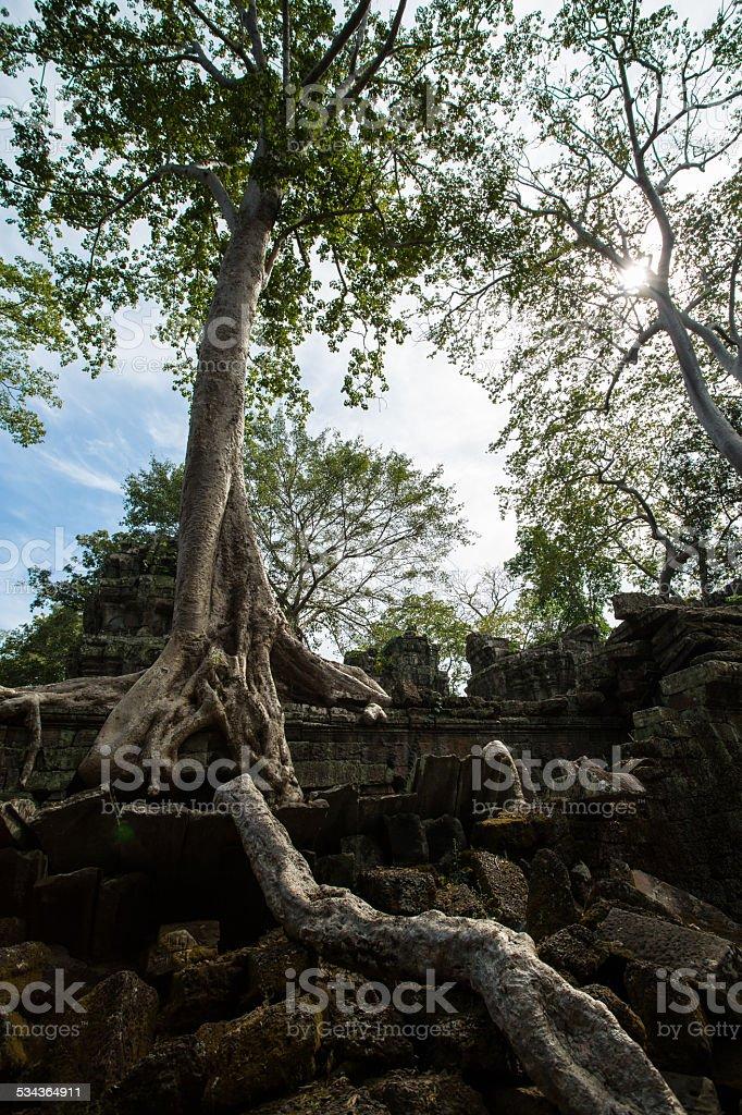 Ta Phrom Castle, Angkor Thom, Cambodia - Stock Image stock photo