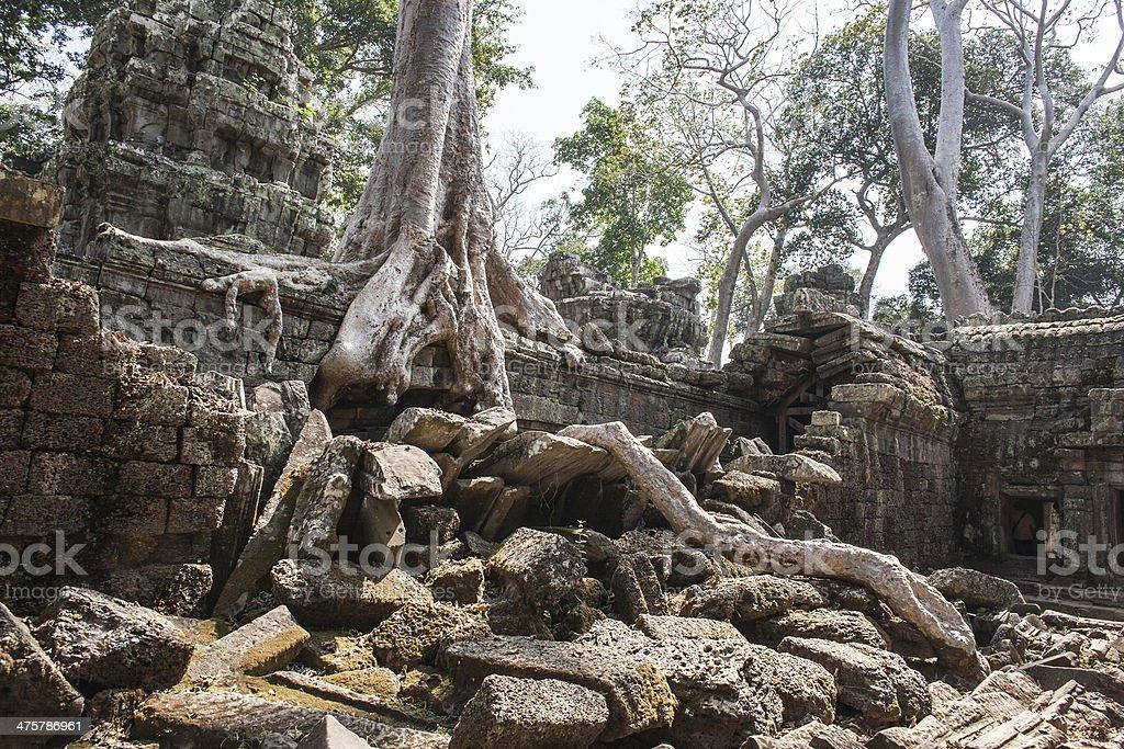 Ta Phrom. Siem Reap. Cambodia stock photo