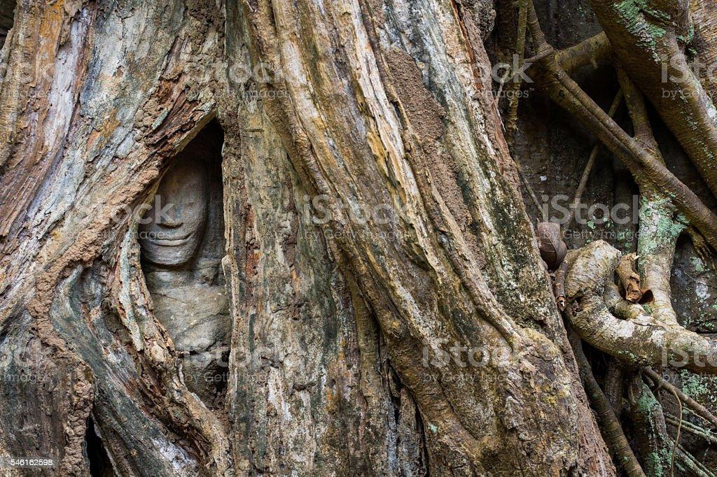 Ta Prohm Hidden Face insde tree stock photo
