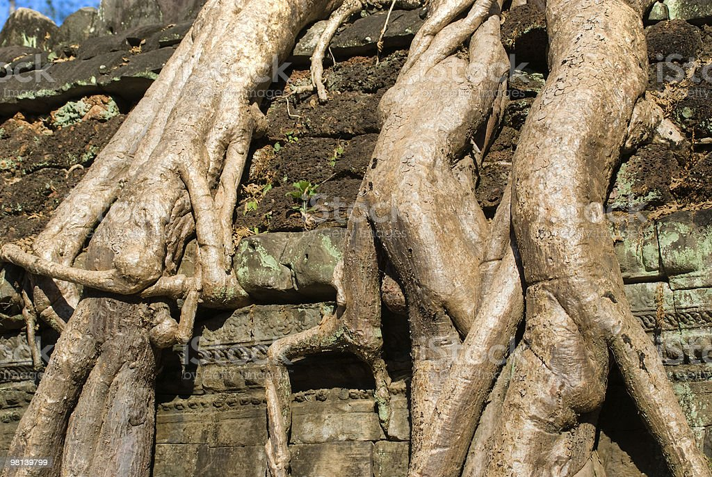 Ta Prohm, Siem reap, Cambodia. royalty-free stock photo