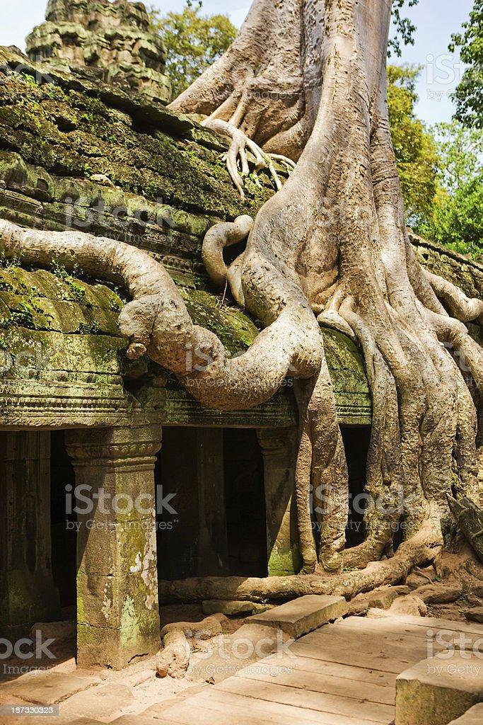Ta Prohm Temple, Angkor royalty-free stock photo