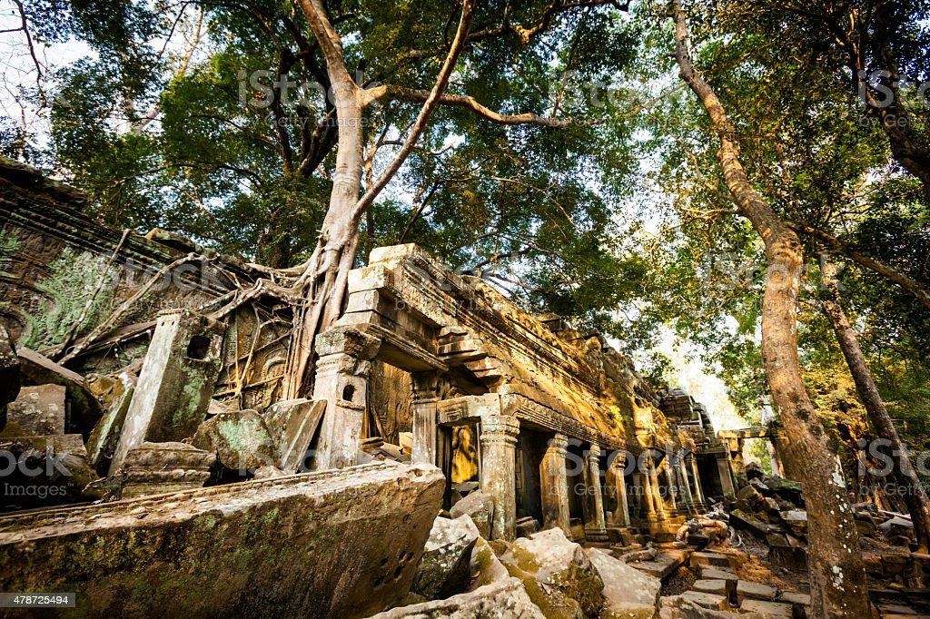 Ta Prohm temple Angkor Wat stock photo