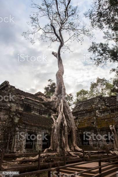 Ta Prohm Temple - Cambodia