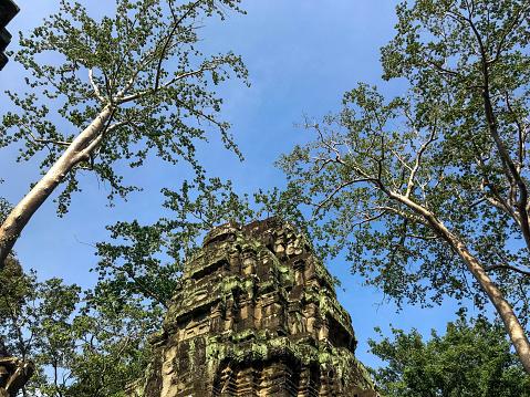 Beautiful landscape of Ta Prohm Temple