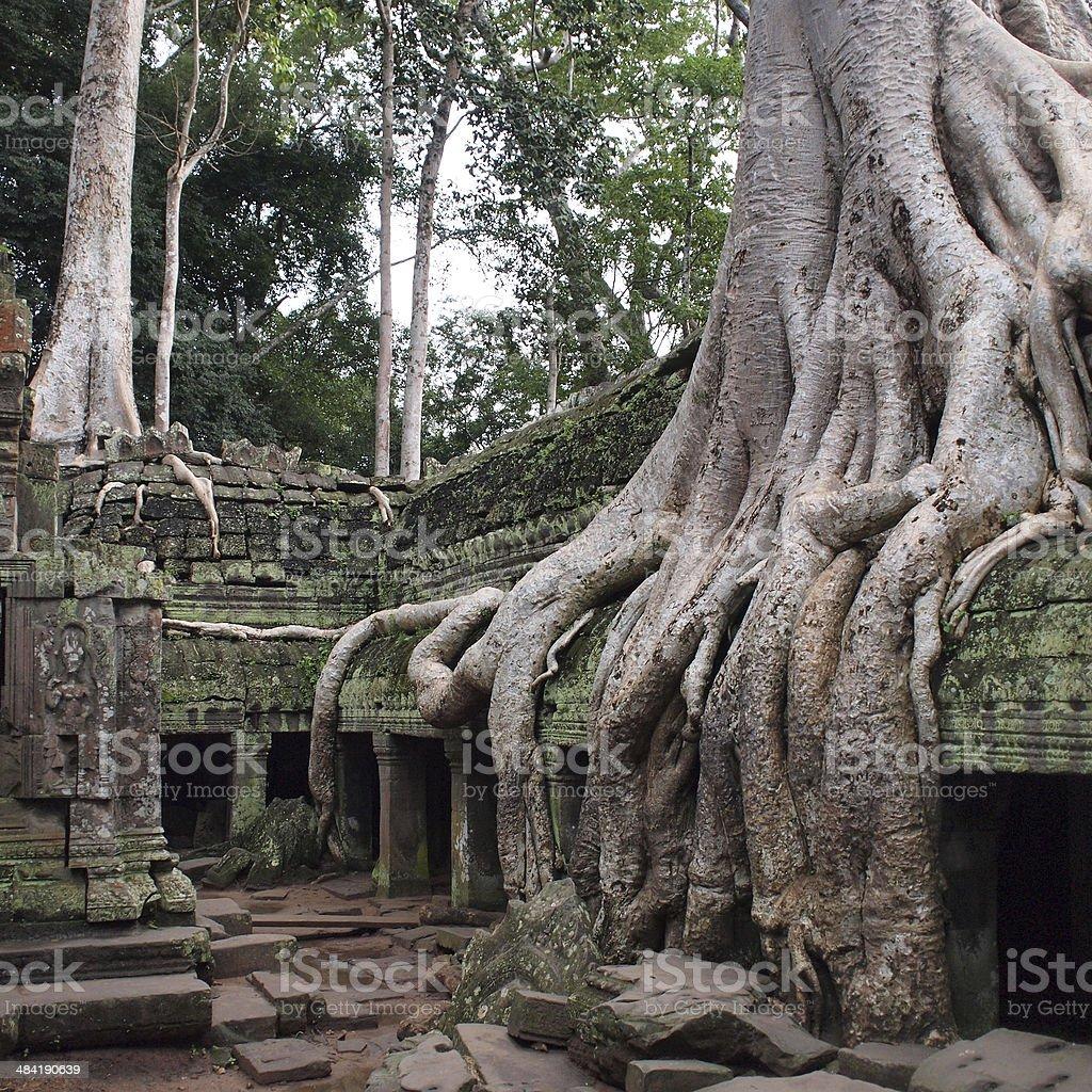 Ta Prohm temple ruins at Angkor stock photo