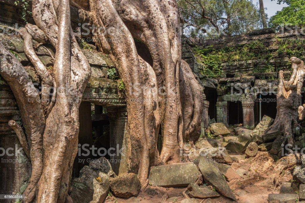 Temple de Ta Prohm avec soie coton arbre racines à Angkor, Siem Reap, Cambodge. photo libre de droits
