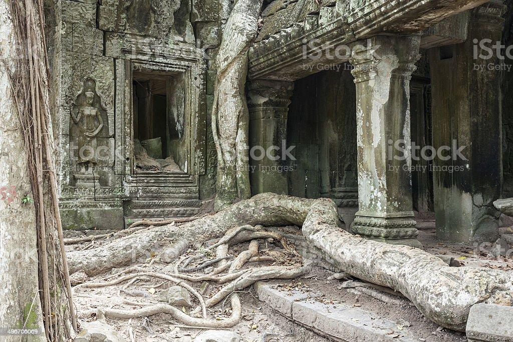 Ta Prohm temple with strangler figs stock photo