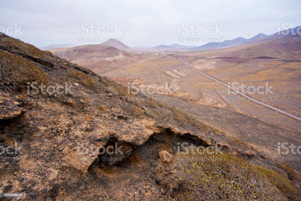 Tabaibas in Mountain Slope - Fuerteventura stock photo
