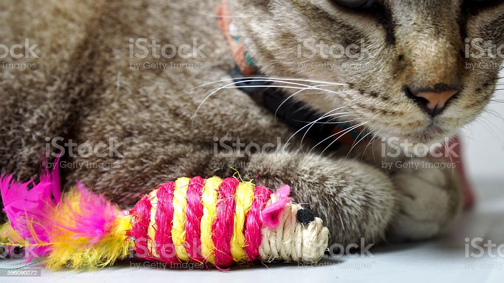 Tabby Cat and Artificial Rat Sleeping royalty-free stock photo