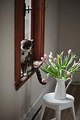 animal, domestic cat, tulip, flower