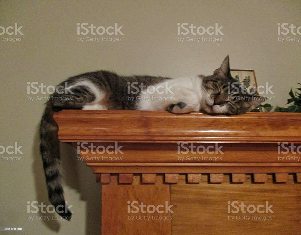 Tabby Cat, Asleep, on Top of a Wooden Mantle stock photo