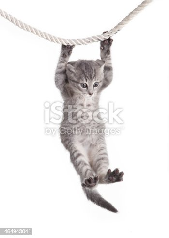 istock tabby cat hanging on rope 464943041