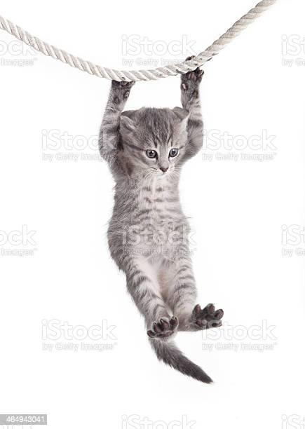 Tabby cat hanging on rope picture id464943041?b=1&k=6&m=464943041&s=612x612&h=e7kr7e5fsinail4cju zkcq3c3apboi t 2plfgc4wi=
