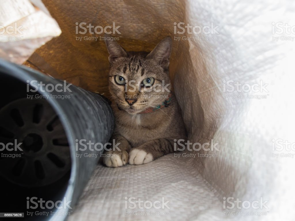 Tabby Cat in a Sack stock photo