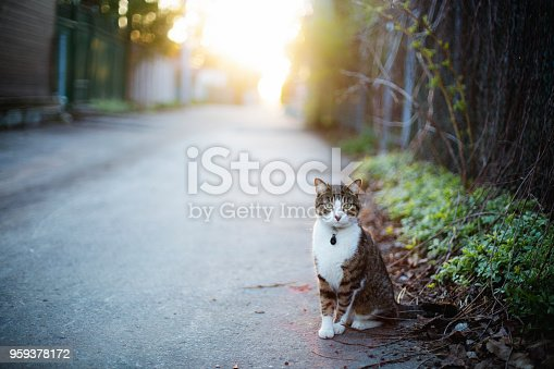 domestic cat, montreal, alley, animal themes