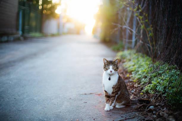Tabby cat in an alley picture id959378172?b=1&k=6&m=959378172&s=612x612&w=0&h= enmikzwjiutcml1tptppzid5qqwlgvqc3wosj5ojqa=