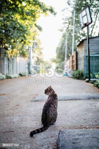 single lane road, animal, cat, pet