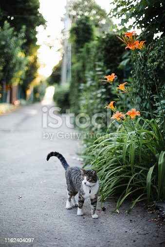 animal theme, domestic cat, montreal, alley, flower