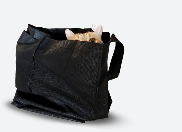 Tabby cat in black sack picture id1017169952?b=1&k=6&m=1017169952&s=612x612&w=0&h=icbnyvpzennr6bxvpxbs6ztwjusn sbaf gwnr6kn4k=