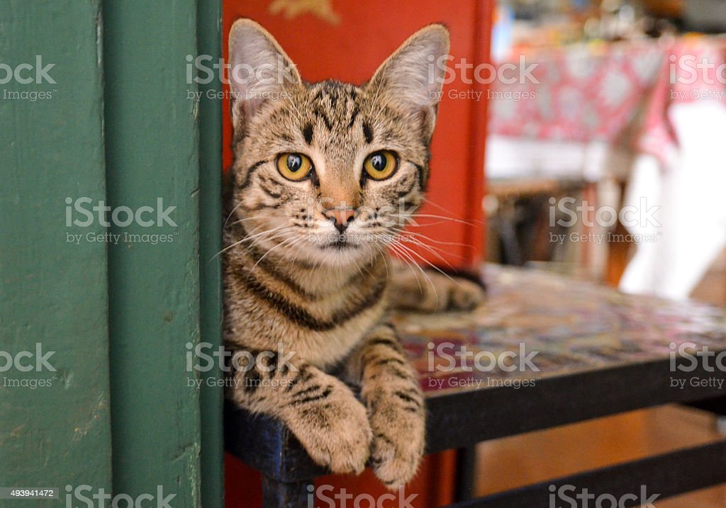 Tabby cat in front of bright background stock photo