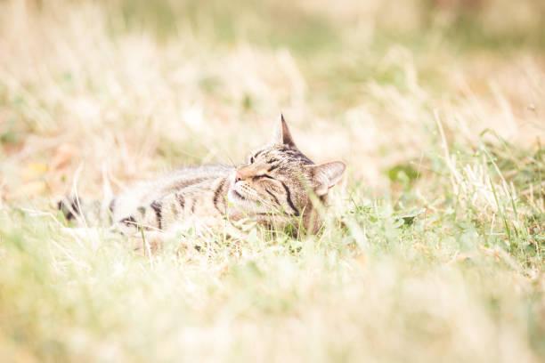 Tabby cat in the autumn grass picture id1175005366?b=1&k=6&m=1175005366&s=612x612&w=0&h=oz5oqlu r8fw14gkwr8slszsr3abgebsvem1ifipxai=