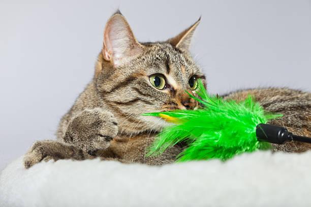 Tabby cat in white basket with toys picture id459109125?b=1&k=6&m=459109125&s=612x612&w=0&h=sc  yxioxulfhznubbm8bsmp7o0q2dntk6vzj qsvfu=